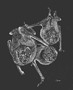 Bat Mixed Media - Vampire Bats by Edwin Rosado