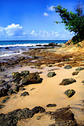 Puerto Rico Prints - Vieques beach Print by Thomas R Fletcher