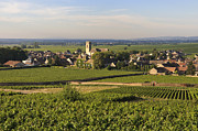 Grape Vineyards Metal Prints - Vineyard and village of Pommard. Cote dOr. Route des grands crus. Burgundy. France. Europe Metal Print by Bernard Jaubert