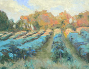 Blue Grapes Painting Prints - Vineyard Evening Print by Michael Camp