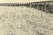 One Point Perspective Photo Posters - Vineyard Poster by Maria Bobrova