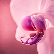 Hannes Cmarits - violet poetry