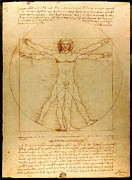 Featured Drawings Posters - Vitruvian Man Poster by Leonardo da Vinci