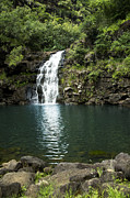 Waimea Falls Framed Prints - Waimea Falls Framed Print by Charmian Vistaunet