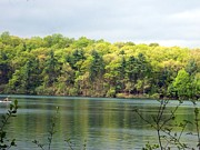 Walden Pond Framed Prints - Walden Pond Framed Print by Catherine Gagne
