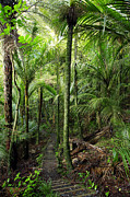 Jungle Photos - Walking trail  by Les Cunliffe