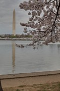 Spring Photo Metal Prints - Washington Monument - Cherry Blossoms - Washington DC - 011317 Metal Print by DC Photographer