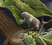 Featured Metal Prints - Water Bear Metal Print by Eye of Science and Science Source