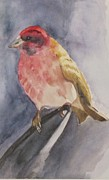 Robin and John Hassler - Watercolor Wren