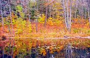 Fall Landscape Art - Waterfront Reflection by Terri Gostola