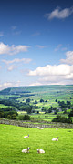 Featured Art - Wensleydale Yorkshire Dales England by Colin and Linda McKie