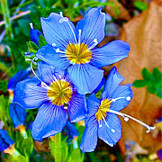Flax Digital Art Prints - Western Blue Flax in Skagway-AK  Print by Ruth Hager