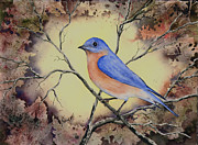 Feather Painting Acrylic Prints - Western Bluebird Acrylic Print by Sam Sidders