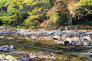 Williams River Scenic Backway Prints - Wet Autumn Day Print by Thomas R Fletcher