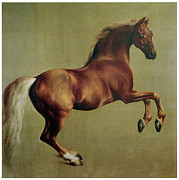 Stubbs Framed Prints - Whistlejacket Framed Print by George Stubbs