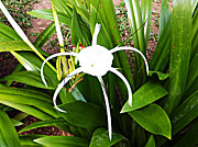 Lily Digital Art Originals - white Lily by Laszlo Slezak