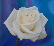 To-Tam Gerwe - White Rose