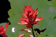 Rick Thiemke - Wild Flower