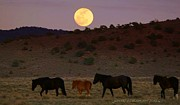 Jeanne  Bencich-Nations - Wild Horse Moon