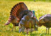 Mary Almond - Wild Turkey