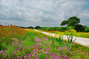 Lynn Bauer Photography Posters - Wildflower Wonderland Poster by Lynn Bauer