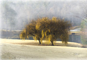 Cris Hayes Art - Willow Fog  by Cris Hayes