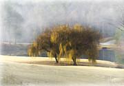 Cris Hayes - Willow Fog