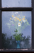 Yellow Flower Scent Posters - Window Poster by Svetlana Sewell