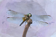 Dragonflies Digital Art - Wings of Beauty by Betty LaRue