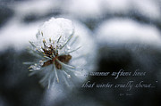 Close Focus Nature Scene Photo Posters - Winter Poster by Darren Fisher