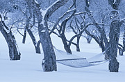 Apple Orchards Prints - Winter Dreams Print by Alan L Graham