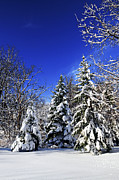 Winter Sky Prints - Winter forest under snow Print by Elena Elisseeva