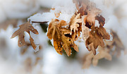 Snow On Branches Prints - Winter Leaves Print by Julie Palencia