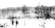 Ink Drawing Prints - Winter Painting II. Ink Drawing by Nature Print by Jenny Rainbow