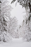 Winter Road Scenes Photo Prints - Winter Road Print by Cheryl Baxter