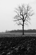 Daniel Kasztelan Metal Prints - Winter Tree Metal Print by Daniel Kasztelan