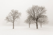 Snow Scene Landscape Framed Prints - Winter trees in fog Framed Print by Elena Elisseeva