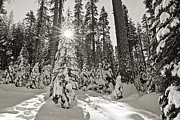 Christmas Holiday Scenery Art - Winter Wonderland - Badger Pass in Yosemite National Park by Jamie Pham