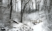 Freezing Photo Metal Prints - Winter Wonderland  Metal Print by Scott Norris