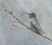 Bird In Snow Posters - Wintering Hummingbird Poster by Angie Vogel