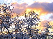 Wintry Digital Art Prints - Wintry Sunset Print by Will Borden