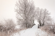 Ruud Morijn - Wooden bridge in a snowy...
