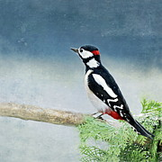 Woodpecker Art - Woodpecker by Heike Hultsch