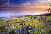Blue Green Wave Photos - Yellow flowers at the sea by Guido Montanes Castillo