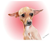 Animal Shelter Mixed Media - Yoda - a former shelter sweetie by Dave Anderson