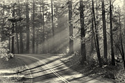 Shadows Photos - Yosemite sunlight by Jane Rix