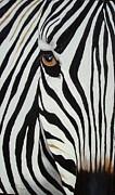 Vanessa Lomas - Zebra Abstract