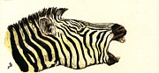 Zebra Head Study Print by Juan  Bosco