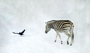 Fur Stripes Prints - Zebra Print by Heike Hultsch