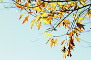Autumn Foliage Prints - Autumn  Print by Les Cunliffe